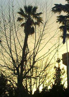 Sunset Rome 2014