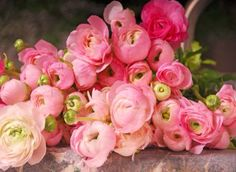 Ranunculus...so beautiful!