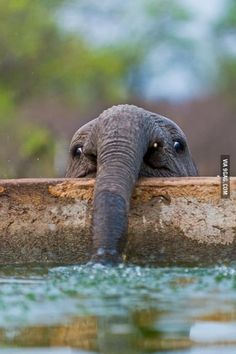A baby elephant blowing bubbles
