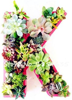 100Pcs Office Desktop Flowers, Mini Succulents Seeds, Indoor Bonsai Seeds, Anti-radiation Computer,Potted Plants Purify the Air