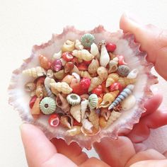 So obsessed! Found in Jeffrey's Bay South Africa #shells #seashells #tinyshells #travelingmermaid