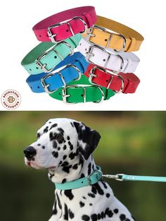 Classic Leather Dog Collar Small Medium Large Pink Blue Red Green White by BronzeDog on Etsy https://www.etsy.com/listing/469408862/classic-leather-dog-collar-small-medium
