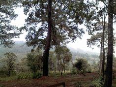 En la tranquilidad del bosque de Mazamitla, Jalisco ; )