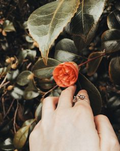 Two robins in love — silver ring by Tales of O.