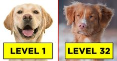 What Level Can You Get To In This Never-Ending Dog Breed Quiz? , Are you a dog lover? Think you can name all 45 of these dog breeds? Well, if you wanna try, just match the correct dog breed to the dog — be careful . Dog Breed Quiz, Senior Pranks, Disney Facts, Disney Movies, Disney Characters, Disney Animation, Cute Puppies, Cute Cats, Dog Breeds