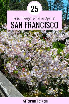 Visiting San Francisco in April? Discover 25 fun, free things to do including checking out the cherry blossoms, visiting some of our top attractions, and attending a street festival. San Francisco Attractions, San Francisco Shopping, Canada Destinations, California Travel, Northern California, Free Things To Do, Travel Inspiration, Travel Ideas, Travel Usa