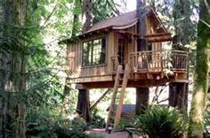 treehouses - Bing images