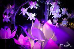 Elysian Weddings Info & Review   Decor & Events in Delhi   Wedmegood