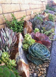 Desert Landscaping Backyard, Succulent Landscaping, Front Yard Landscaping, Landscaping Ideas, Mulch Landscaping, Backyard Arizona, Arizona Landscaping, Modern Backyard, Small Succulents