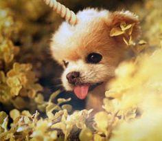 Unipuppy is the best puppy in the world!