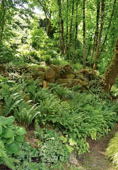 Gardening under a forest canopy is business as usual in the Pacific Northwest, where many fine woodland gardens flourish in the shadow of Douglas firs, western red cedars, western hemlocks, and bigleaf maples.