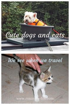 Cute dogs and cats we see when we travel. How do we fill the void of missing our pets when we travel? #cats #dogs #travelmoments #travel #pets Africa Travel, Us Travel, Wetland Park, Marine Ecosystem, Road Trip Adventure, Cute Cats And Dogs, Game Reserve, Worldwide Travel, Travel Around The World