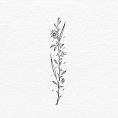 wanna get a tattoo on my spine based on the multi-speciesed flowers in the movie Annihilation, something whimsical dainty like this pin. a mix of thin and bold lines Thin Line Tattoos, Thin Tattoo, Get A Tattoo, Back Tattoo, Small Tattoos, Temporary Tattoos, Dainty Flower Tattoos, Flower Spine Tattoos, Flower Outline Tattoo