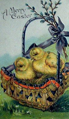 easter basket of chicks