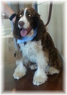 Bart finished his last chemotherapy treatment with Dr. Michelle Wall today!  Way to go Bart!