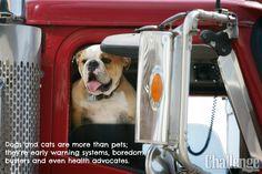 Pets & Trucking in #ChallengeMagazine.