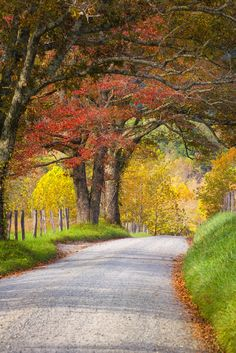 Cades Cove - The place that everyone loves in the Smokies!