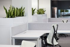 Open plan workstation. Fresh, white office space. Corner desk. White modern storage cupboards. Plants freshen office space. Swivel office chairs. Ergonomic office chairs.