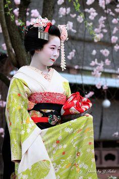 April 2015: maiko Komako under cherry blossoms.