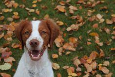 Fall fido fun! #cute #dog playing in #nature during the #fall season ! #woof!