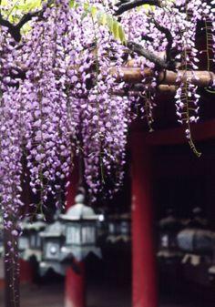 Kasuga Shrine in Nara, Japan 春日大社
