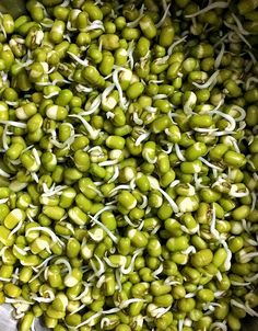 Sprouting to glory! Green lentils!