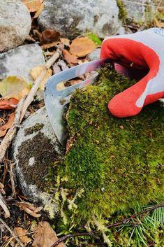 Buy Terrarium, Moss Terrarium, Terrariums, Terrarium Ideas, Free Garden Planner, Moss Graffiti, Types Of Moss, Buy Moss, Moss Garden