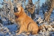 This is just one of many organizations that keep Golden Retrievers and find them good homes! I wanna dog!