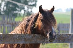 Buddy Pictures To Draw, Horses, Drawings, Photos, Animals, Animales, Pictures, Animaux, Horse