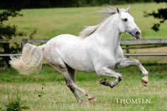 Reitseite Kieler Nachrichten, immer donnerstags, Alles,was ihr schon immer über Pferde lesen wolltet...  www.kn-online.de/reiten Fotograf: Andreas Thomsen