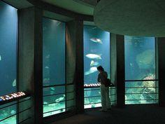 B.more Aquarium