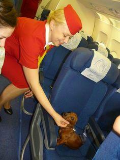 eveyone loves a dachshund