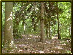 Woods of Wenona