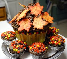 Thanksgiving cake and cupcakes #thanksgiving #f
