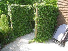 Färdiga skärmar med murgröna från Vegtech
