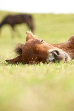 Love and miss the spring foals :)