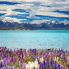 Neuseeland Rundreise - Lake Tekapo http://www.neuseeland-special-tours.de/