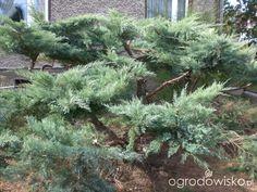 Beautiful Gardens, Bonsai, Landscape, Amazing, Plants, Patio, Gardens, Travel Destinations, Travel