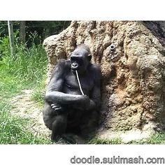 #gorilla #doodle #art #photographer http://doodle.sukimash.com/file/view/3842