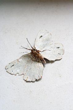 私は白い蝶を発見 / I Found a White Butterfly   -  Morison Kobayashi    -    http://specialsource.jp/?cat=7   -    -  http://www.specialsource.jp/images/IMG_4816w.jpg