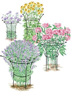 Essex Plant Support. Attractive plant supports hold flowers in a graceful shape and prevent flopping. Made from long-lasting, heavy-duty, powder-coated steel. Small Supports are sold in sets of 2. Medium, Large and X-Large Supports are sold individually