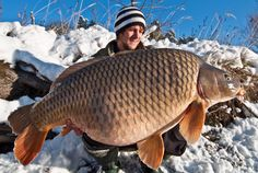 Big Winter Carp from Rok!