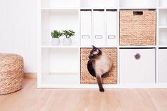 Gemütliches Katzenkörbchen für Kallax Regale – da muss die Katt rin. Das Ikea Kallax Regal ist neben dem Billy Regal wohl eines der beliebtesten Ikea Regale in Deutschland und das nicht nur aufgrund seiner unendlich vielen...