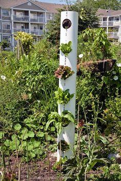 Vertical gardening using PVC pipe