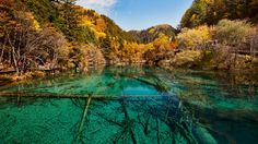 Considered the jewel of Jiuzhaigon National Park in China, the Five-Flower Lake a a shallow multi-colored lake with water so clear, you can see its bottom, criss-crossed by ancient fallen tree trunks.