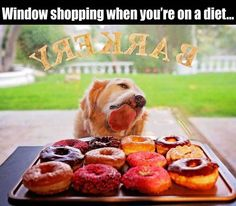 Window shopping on a diet... #funny #dogs  Order an oil painting of your pet now at www.petsinportrait.com