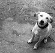 SRD, viralata, cachorro, dog, puppy, puppies, cão