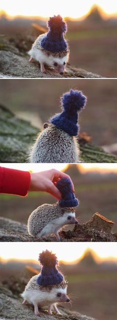 Pendleton the Hedgehog… it has a hat! when i have a hedgehog i will knit it a hat! :D