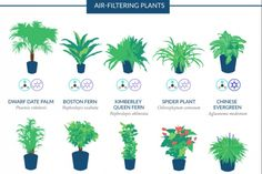 The Best Air-Purifying Houseplants According To NASA [INFOGRAPHIC]