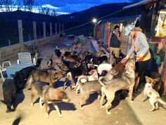 "Tonight, our food drive stops at the ""Bosnian Dream Shelter"" where 107 dogs are going to bed with full bellies. This refuge for dogs has only two days food left, but now, they'll be able to purchase a new supply in the morning. This is one of dozens of underdog rescue centers we're sponsoring this month as winter sets in.  THANK YOU EVERYONE for making dreams come true."